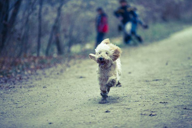 I love Tank. He runs so fast!