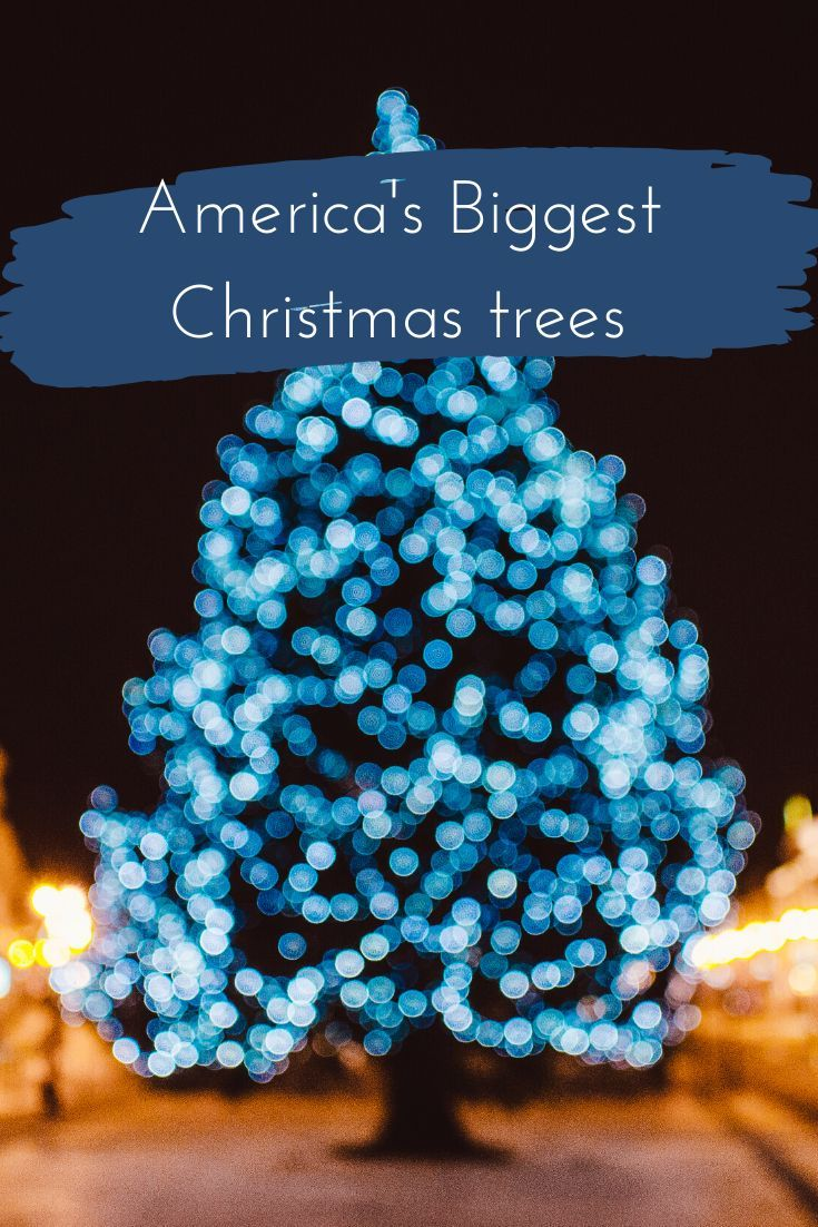 15 Biggest Christmas Trees In The Us Big Christmas Tree Christmas Tree Tall Christmas Trees