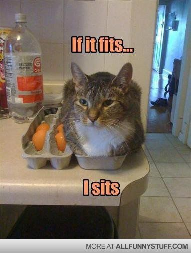 funny-cat-picture.jpg 382×506 pixels                                                                                                                                                                                 More