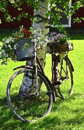 livetpavestergard.blogspot.com: Gardens Bike, Bicycles Tricycle, Bike Bicyclett Bicicleta, Bicycles Planters, Gardens Gardens, Bike Beauty, Old Bike, Funky Fleas, Gardens Bycicl
