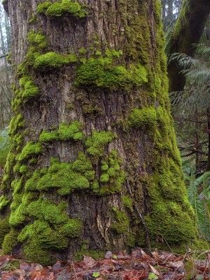Killing Moss How To Kill Moss On Your Lawn And Garden