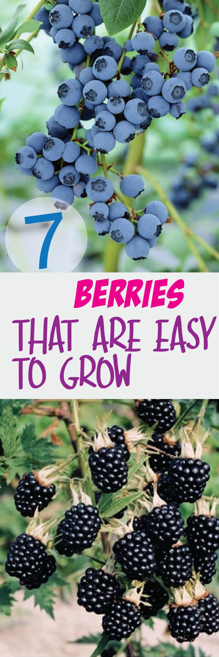 7 Berries That Are So Easy To Grow – Making DIY Fun
