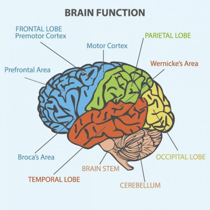 How aphasia causes difficulty speaking. Brain areas ...