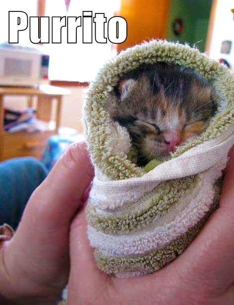 Purrito Cats & Dogs and more cuties Pinterest