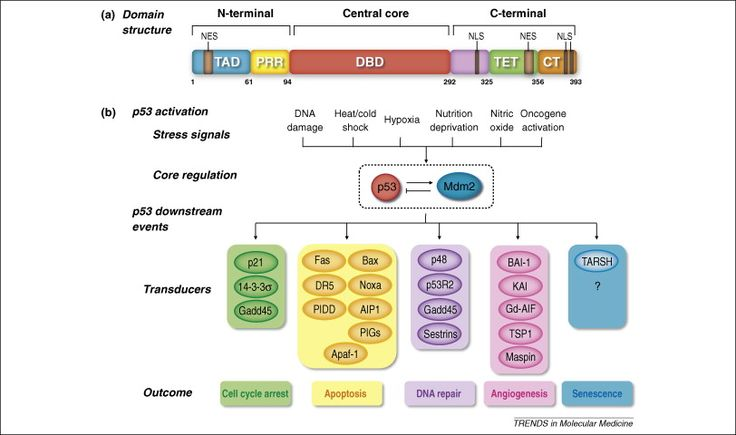 Database of Cell Signaling and Virtual Journal