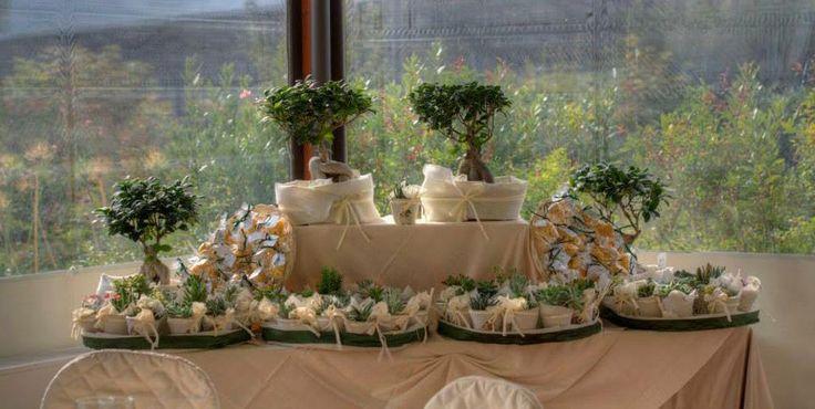 bomboniere ecologiche bonsai e piantine grasse