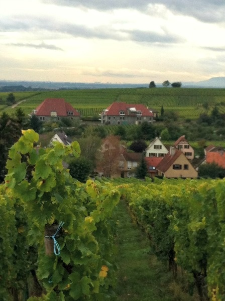 Break Up With Chardonnay And Drink Wines From Alsace - Forbes