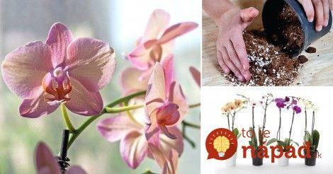 Orchidey sú mimoriadne zaujímavé kvety, ktoré rastú v mnohých oblastiach sveta, no najviac v trópoch. Vedeli ste, že na celej planéte existuje približne 17 000 druhov a farieb týchto kvetín?    Pritom až 90% orchideí sú druhu