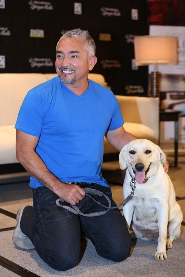 @Cesar Millan Here's some crucial advice for all dog lovers! rplr.co/1m0JLMz