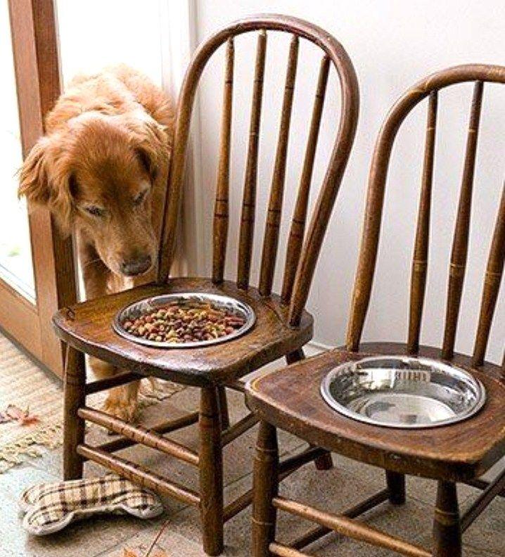 On n'y pense pas forcément, mais imaginez-vous à chaque repas, devoir vous tordre le coup pour manger ? Non évidemment, pourtant les chiens de grande taille sont obligés de se baisser pour atteindre leur gamelle, ce qui ne leur donne pas une position confortable pour manger. Avec l'âge et les...