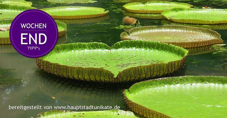 Hauptstadtunikate: #Wochenende #Tipp #Berlin 21.07. - 23.07.17 #berlinbeerweek #CSD_Berlin Christopher Street Day  Botanische Nacht Botansicher Garten Rock im Grünen