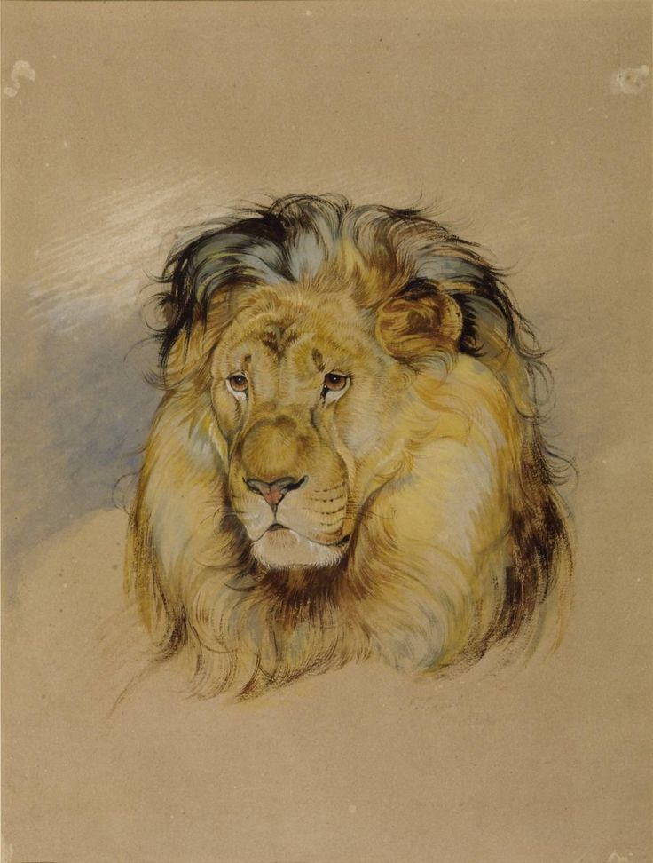 John Frederick Lewis (1805‑1876)  Head of a Lion,  1824   Watercolour on paper,  343 x 260 mm Collection Tate