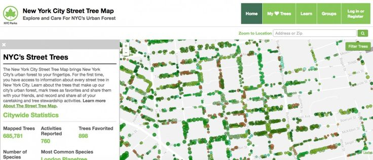 New York City Mapped All of its Trees and Calculated the Economic Benefits of Every Single One