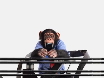 monkey on cell phone gif