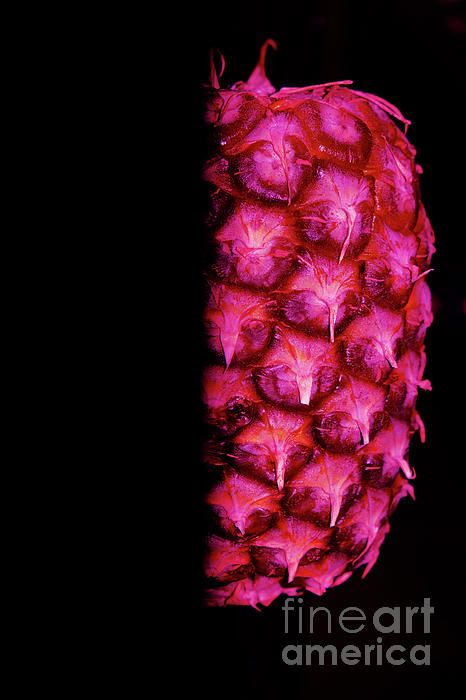 Pink and purple abstract pineapple photography by Tracey Everington of Tracey Lee Art Designs