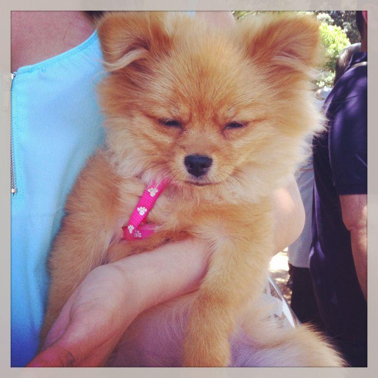 DogFest cucciolo