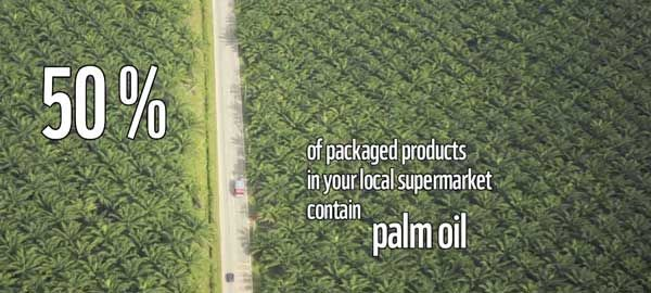 sustainable-palm-oil.jpg (600×270)