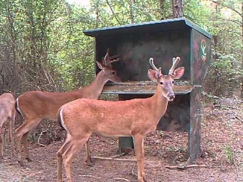 Gravity Deer Feeder Videos  http://huntdead.net/