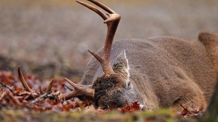 Deer Hunting Blinds Camouflage