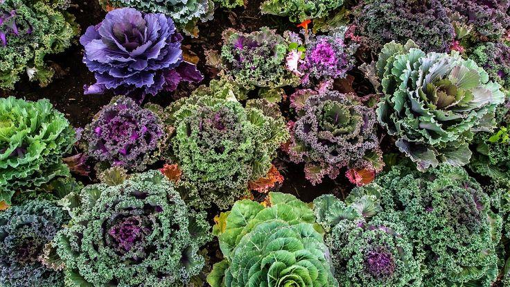 11 legume crucifere și beneficiile lor nutriționale #nutriție #sănătate #dietă #legume