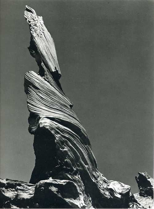 Edward Weston   Driftwood Stump (Crescent Beach)   1937