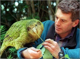 My FAVORITEST Parrot - the Kakapo Parrot (or Owl Parrot) of New Zealand!!    It is the heaviest parrot in the world.  Two other features make it extraordinary; it is also the ONLY flightless parrot and the ONLY  nocturnal parrot known to man.  The Kakapo Parrots, are critcally endangered.  As of November 16,  2009, there are 124 Kakapo Parrots in the wild.