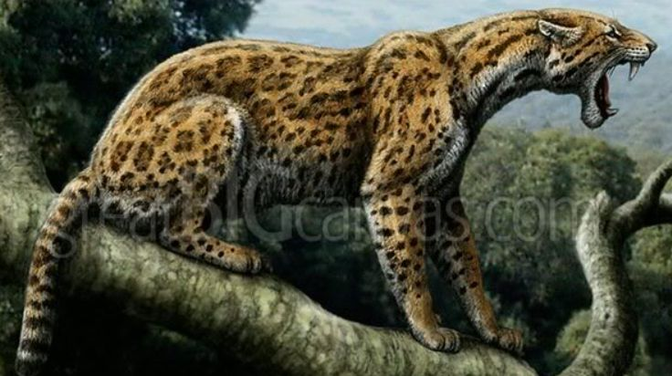 Promegantereon Stone Age Animals Extinct Animals Animals