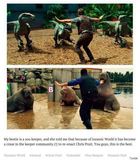 Les gardiens de zoos imitent Chris Pratt  2Tout2Rien