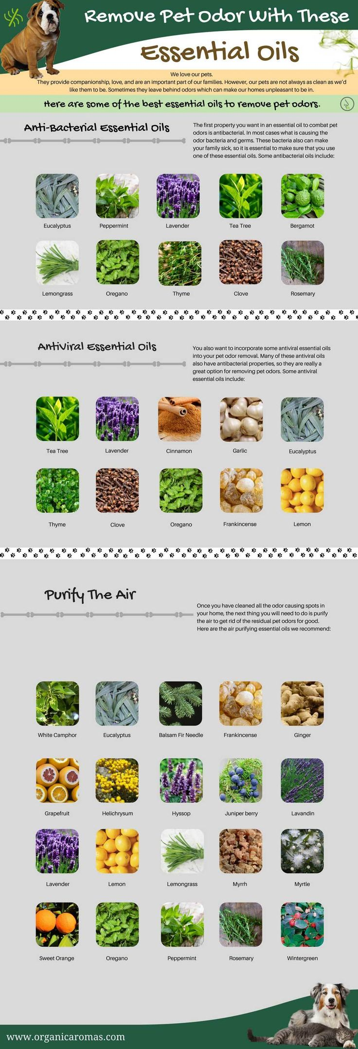 Remove Pet Odor with Essential Oils Info-graphic