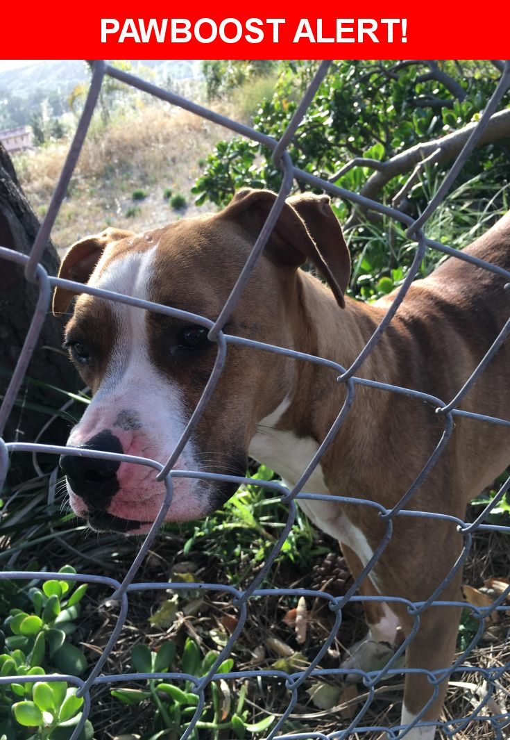 Is this your lost pet? Found in Vista, CA 92084. Please spread the word so we can find the owner!  Very sweet smaller female possible Boxer/Pit mix. She has tan fur throughout, with pink markings on her nose and white stripe coloring on chest and head.   Nearest Address: Near Fairview Dr & Aldorado Dr