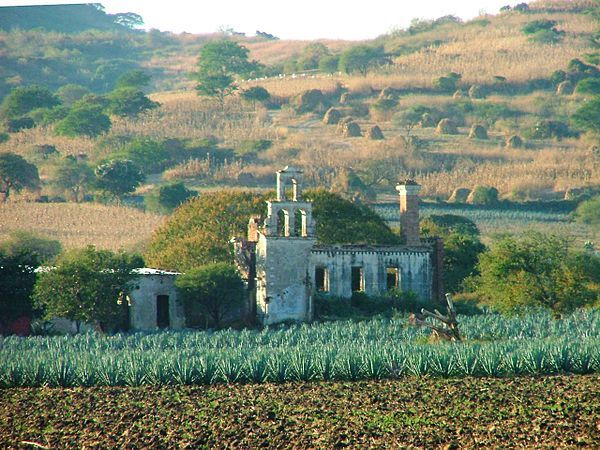 Agricultura en México - Wikipedia, la enciclopedia libre