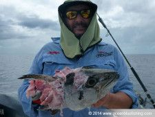 A good catch in Vanuatu species.