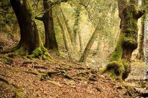 Tureddu la valle incantata - Viaggio in Sardegna
