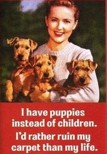 Truth.Cat, Puppies, Laugh, Funny Pictures, Children, Ruins, Kids, True Stories, Crazy Dogs Lady