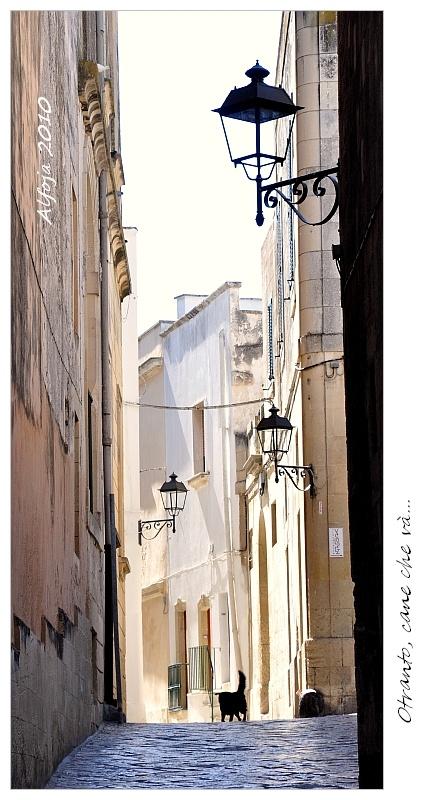Otranto - Puglia - Italia - cane che va'..