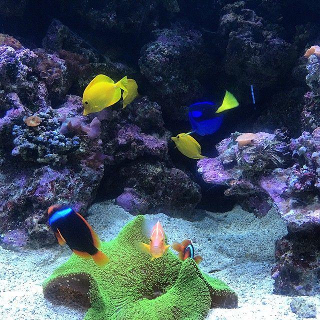 Ripleys Aquarium In Myrtle Beach South Carolina