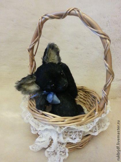 Любимчик - чёрный,чихуахуа,чихуа,собачка,собачки,песик,щенок,щенок тедди