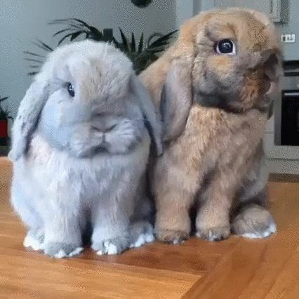 50 best Boop the Snoot images on Pinterest | Animals ...