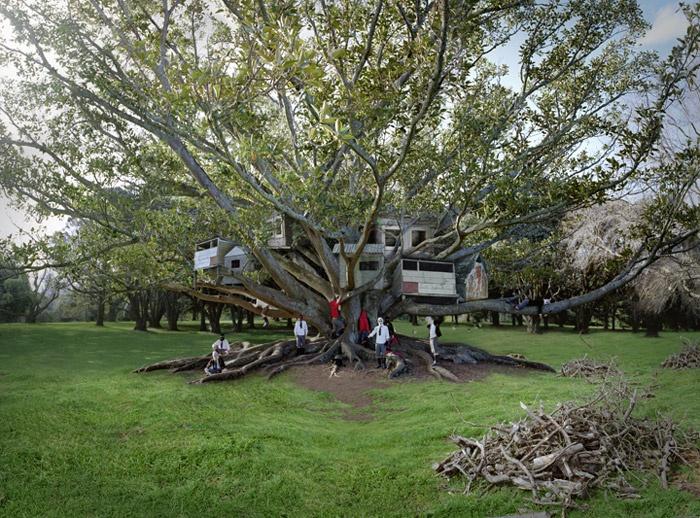 "Anthony Giocolea ""Tree Dwellers"""
