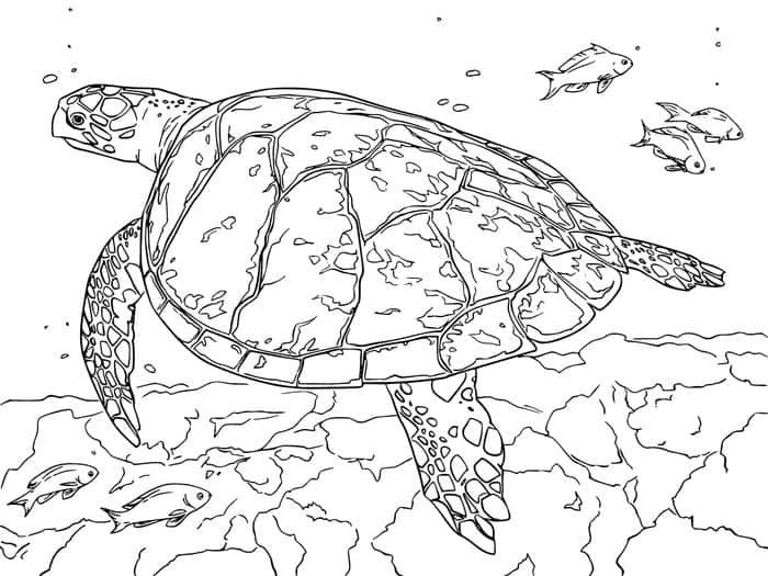 Free Printable Sea Turtle Realistic Coloring Pages In 2020 Turtle Coloring Pages Animal Coloring Pages Snake Coloring Pages