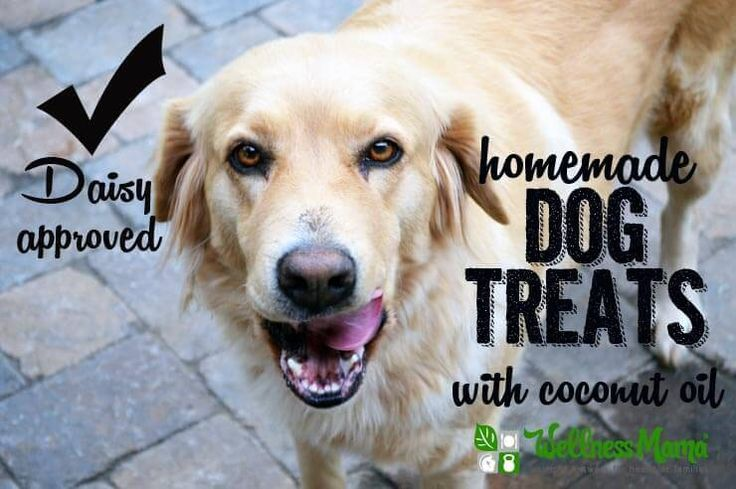 Homemade Dog Treats (With Coconut Oil) - These homemade dog treats are packed with nutrients and delicious (for dogs). Ingredients like sweet potato, coconut oil, coconut flour, bacon, and eggs!