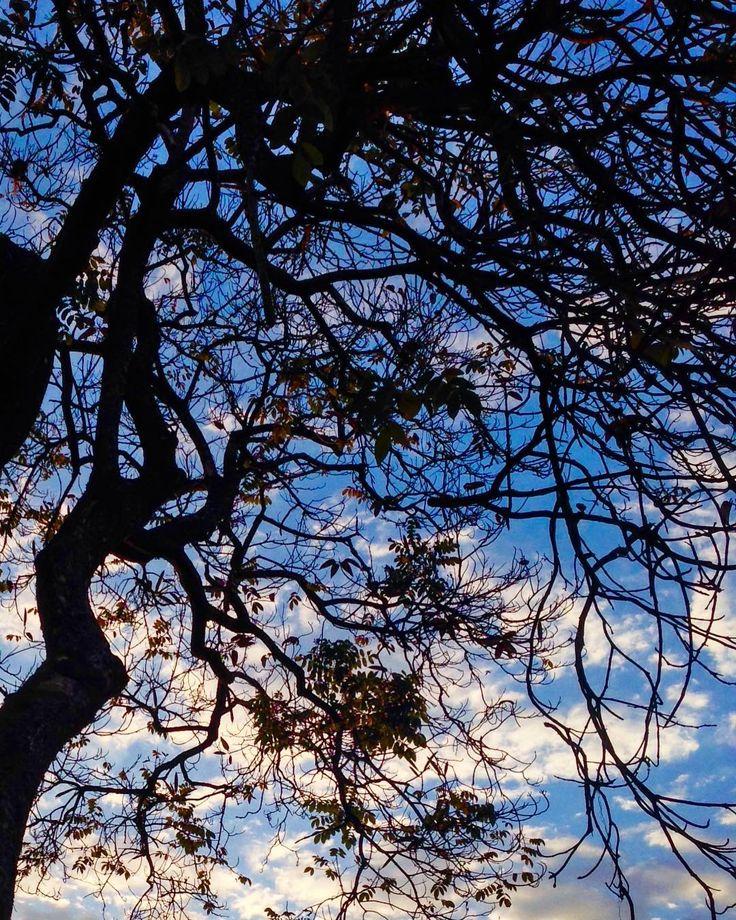 Só os gravetin . . . . #saved #nature #árvoresdebrasília #brasilia