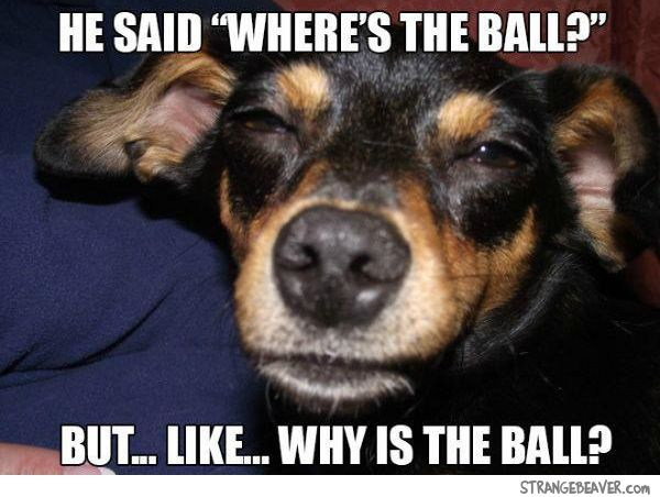 """The """"Philosophical"""" Stoner Dog 