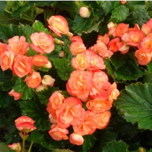 Find This Pin And More On Top Performing Summer Annual Flowers