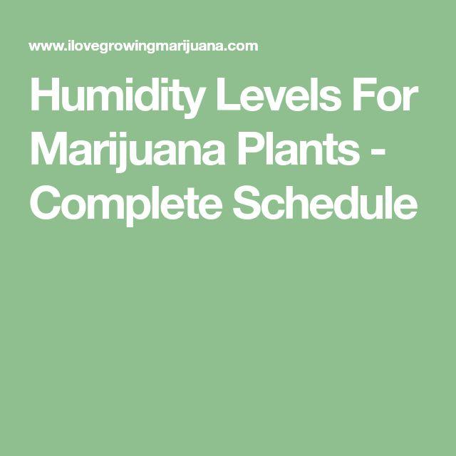 Humidity Levels For Marijuana Plants - Complete Schedule