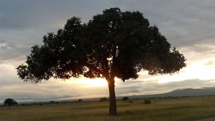 Mikumi National Park & Udzungwa Rain Forest Safari. http://bit.ly/tanzanasafaritours?utm_content=bufferfb317&utm_medium=social&utm_source=pinterest.com&utm_campaign=buffer