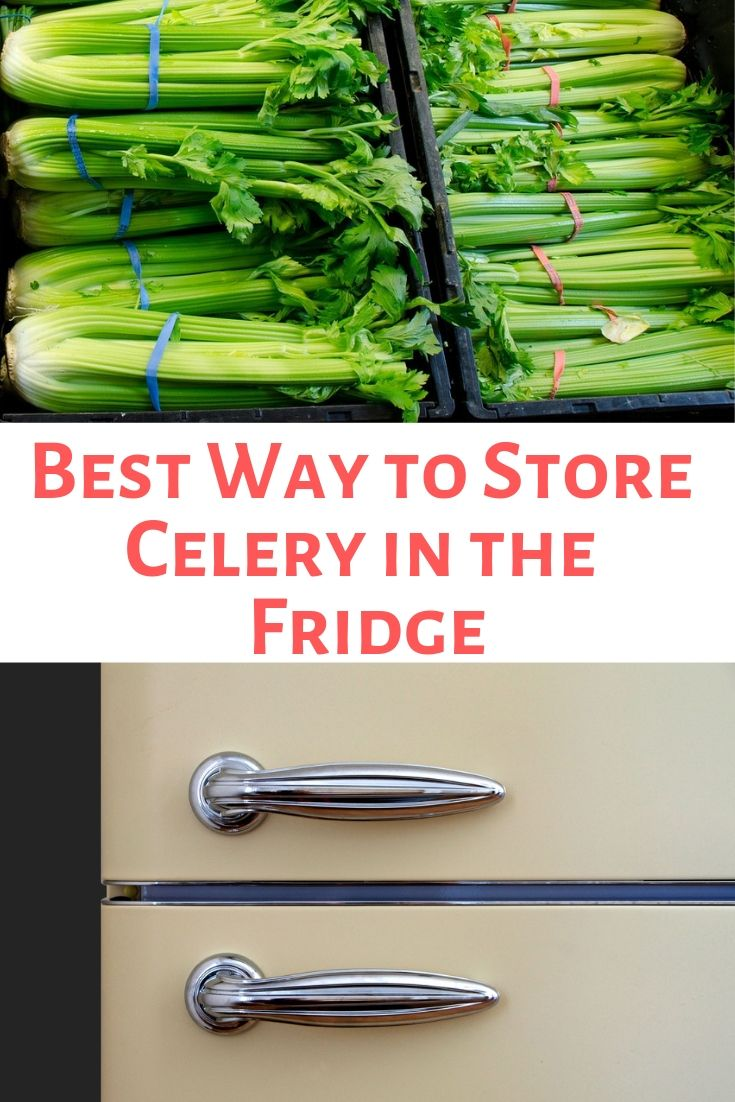 Best Way To Store Celery In The Fridge The Kitchen Professor How To Store Celery Celery Storing Vegetables