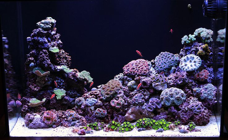 17 best images about saltwater fish tank on pinterest for Aquarium recifal nano