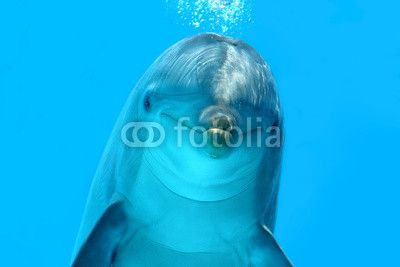 "Download ""Dolphin Look"" Royalty Free Stock Image as low as 1 euro! High-resolution stock photos for any of your projects from eZeePics Studio at Fotolia http://it.fotolia.com/p/200446523"