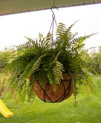 I just bought a hanging fern today! If you have some fairly thin rope, I'd love to buy it from you so I can hang it in a non-ugly pot. ;)